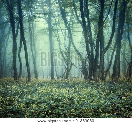 Trail Through A Mysterious Dark Forest In Fog