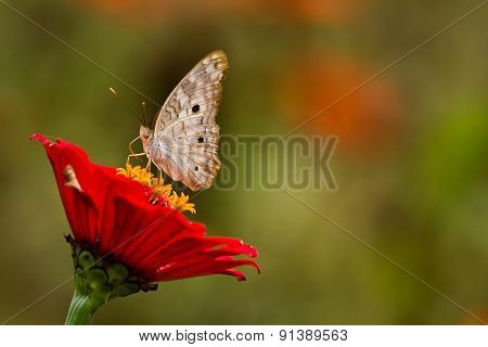 Close up shot of butterfly on rainforest flower, Ecuador