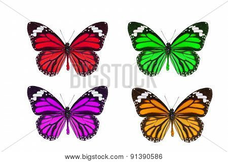 Common Tiger Butterfly (danaus Genutia)