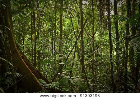 Rainforest nature, Yasuni National Park, Ecuador
