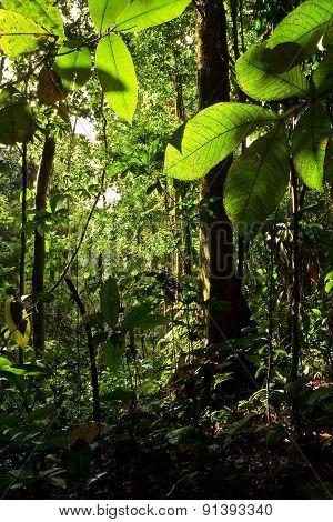 Rainforest nature, Yasuni National Park, Ecuador