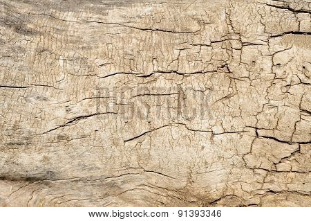 Old Dry Cracked Stump Closeup Background
