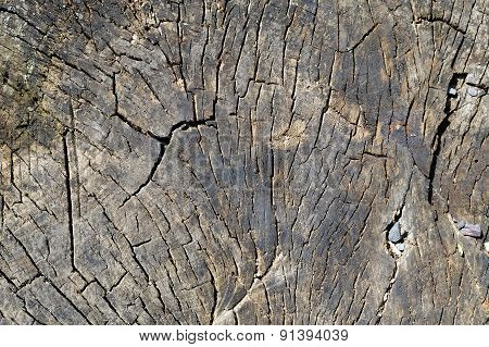 Old Dry Stump With Growth Rings Closeup Background
