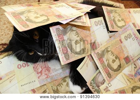 Cat Covered With Ukrainian Money