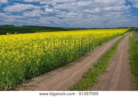 Spring landscape with rape-seed field
