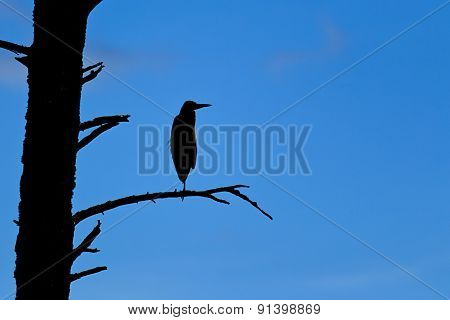 Silhouette Of A Perched Heron.