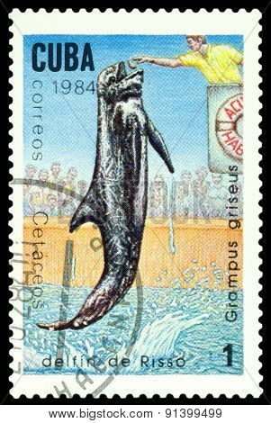 Vintage  Postage Stamp. Risso's Dolphin.