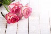 image of rose  - Background with fresh flowers roses in ray of light and empty place for your text - JPG