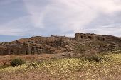 foto of antelope  - Antelope Valley Poppy Reserve in California photo taken in spring time - JPG