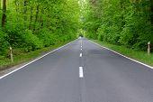 stock photo of tall grass  - The photo shows an asphalt road - JPG