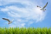 pic of grass bird  - field of grass under sky and flying birds background - JPG