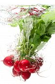 picture of radish  - Bunch of radishes falling into water white background isolated - JPG