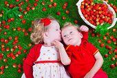 foto of strawberry  - Child eating strawberry - JPG