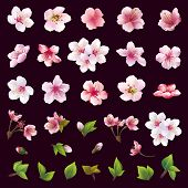 ������, ������: Set Of Flowers Of Cherry Tree And Leaves