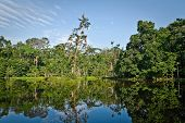 stock photo of rainforest  - Beautiful landscape of nature reflected in amazon rainforest river - JPG
