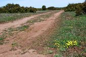 foto of grassland  - Yellow flowers at a dirt road in a plain grassland with junipers - JPG