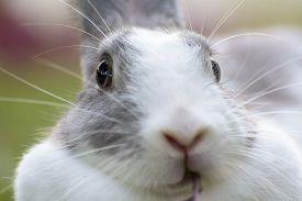 stock photo of bunny rabbit  - Rabbits are small mammals - JPG