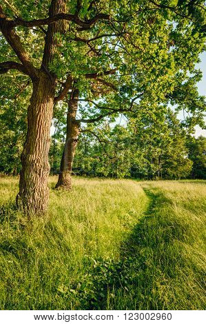 Beautiful Countryside Road Lane Path Way Through Summer Deciduous Forest Woods. Nobody. Vertical