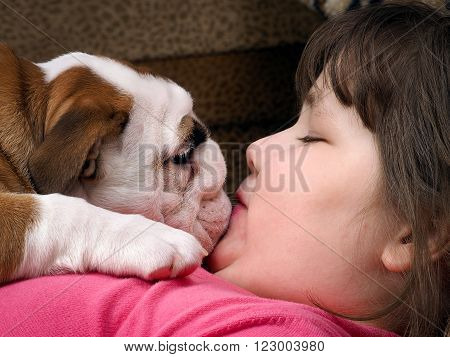 Girl and dog. The girl's face and a large muzzle puppy. Dog English bulldog. The relationship of the child and the dog. Concept - trust, love, the contents of the house dogs.