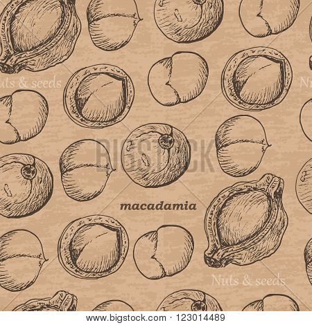 Seamless pattern with macadamia on a vintage background. Vector illustration for your design
