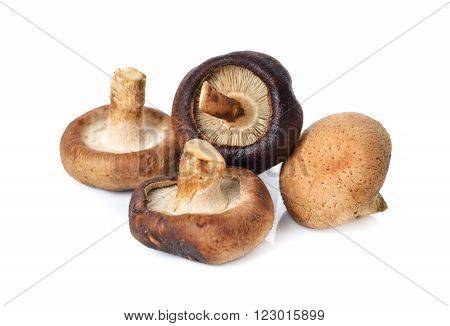 uncooked fresh Shiitake mushrooms on white background