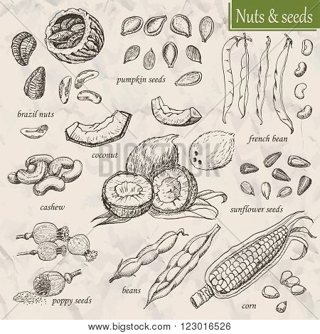 Collection of nuts and seeds. Vector illustration for your design