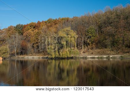 Natural landscape. View from shore of the lake or river of the weeping willow on the other side.