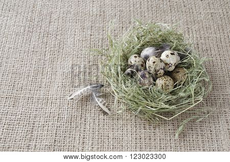 Several quail eggs in a nest of hay on the background of flax, quail feathers.
