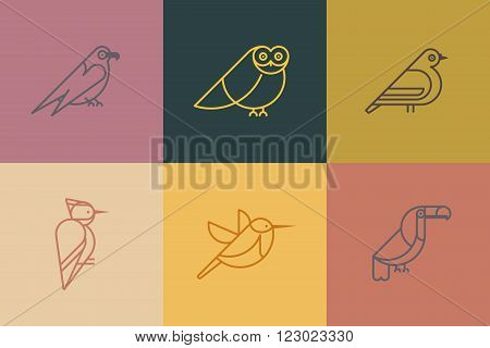 Vector set bird icons. Different birds species like: owl toucan woodpeckers hummingbirds hawk dove. Trendy linear style icon.