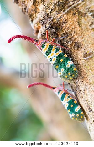 Two insect perched on a tree in summer.
