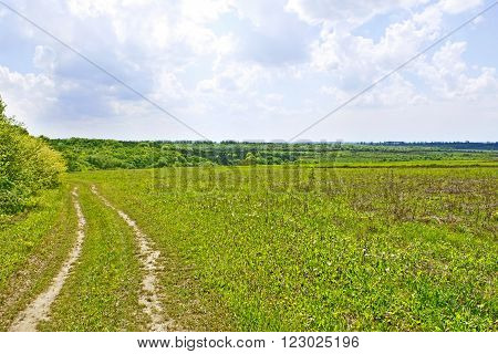 Rural summer landscape with soil road among field and forest cloudy sky
