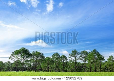 Meadows and trees With a background of blue skies