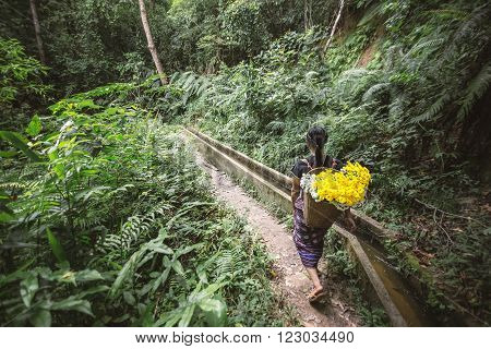 Chiang Mai - Oct 17: Indigenous women picking flowers planted on him. At Ban Mae Klang Luang, Chiang Mai, Thailand. on Oct 17, 2015.
