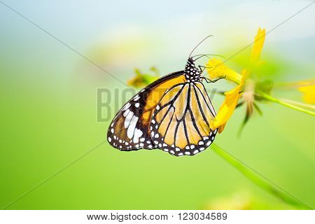 Yellow butterfly perched on a flower in the garden.