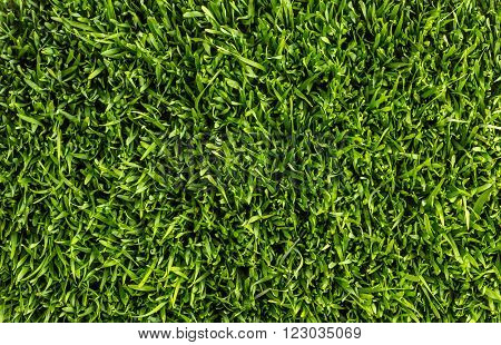 Green grass, natural background texture, top view