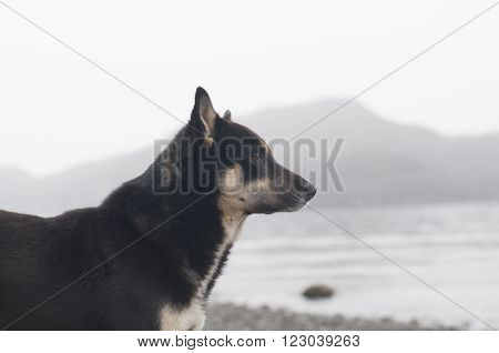 poor homeless dog staying on the sea coast