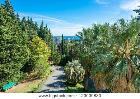 Sochi, Krasnodar Krai, Russia - October 6, 2015: In the Park-the arboretum of Sochi city on a Sunny autumn day, October 6, 2015, Sochi, Krasnodar Krai, Russia.