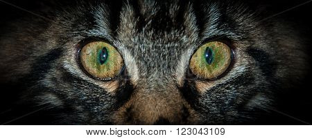 Little kitty with the green and yellow eyes