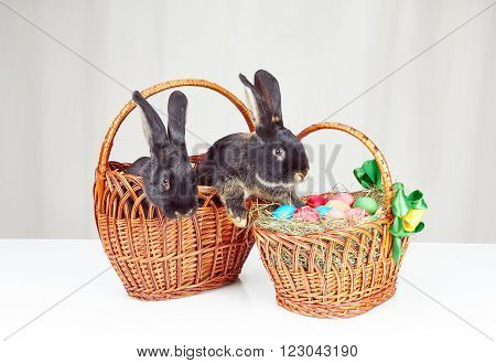 Little rabbits sitting in a basket next to Easter basket