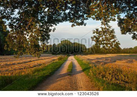 Golden hour on the cornfields near Laren