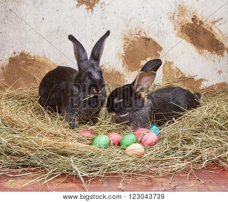 Two rabbit are lying on hay on the background of rural wall
