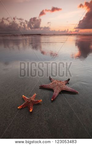 Two starfish on empty beach at sunset