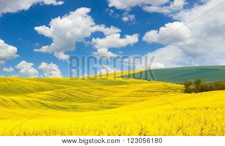 Spring waves hills  landscape of colorful fields and beautiful  blue sky - big size