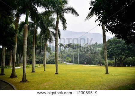 Landscape of beautiful autumn park with palms and trees