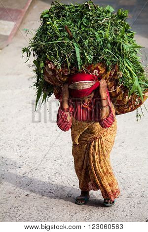Katmandu, Nepal -  April 17 2013:  A Woman Dressed In A Sari Is A Heavy Basket With Grass Traditiona