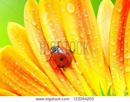 Ladybug and flower on sun