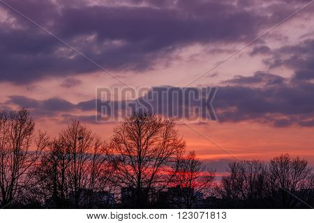 Reddish sunset with tree silhouette seen at Primrose Hill Park in London UK