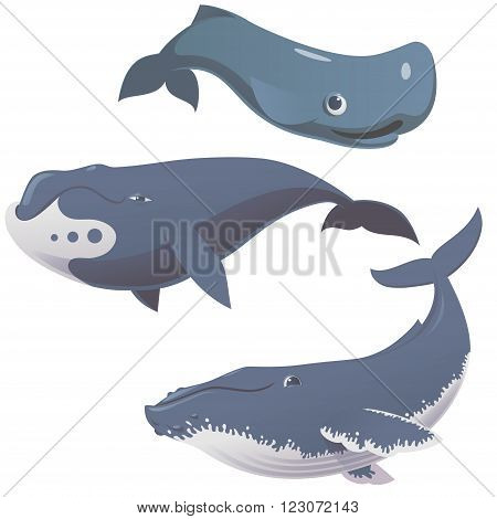 set of cartoon cute and funny whales vector illustration of humpback whale bowhead whale and sperm whale