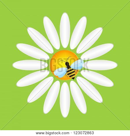 Camomile and bee - vector illustration. Abstract camomile on a green background. Flat daisy over bright green background.