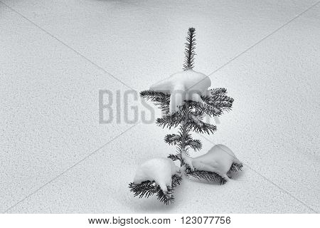 A black and white image of a small pine tree, buried in snow.